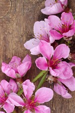 Spring, pink peach flowers, wood board