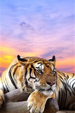Preview iPhone wallpaper Tiger, rest, paws, red sky, sunset