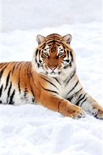 Preview iPhone wallpaper Tiger rest, snow, winter, white world