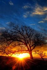 Tree, sun rays, silhouette, sunset, dusk