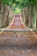 Trees, road, leaves, autumn