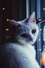 White cat look back, window, lights