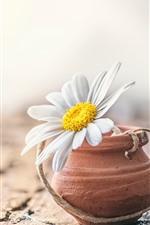 White daisy, hazy background