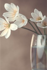 Preview iPhone wallpaper White orchid, glass cup, hazy