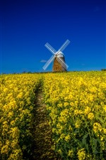 Preview iPhone wallpaper Windmill, yellow rapeseed flowers