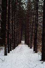 Winter, trees, white snow, winter