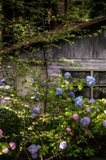 Preview iPhone wallpaper Wood hut, forest, hydrangea