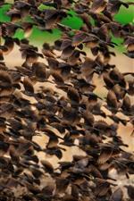 A flock of birds flight