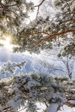 Preview iPhone wallpaper Altay, pine, snow, winter, sun rays