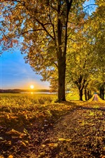 Preview iPhone wallpaper Autumn, trees, golden leaves, path, sunrise