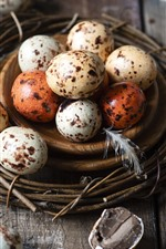 Preview iPhone wallpaper Bird eggs, nest