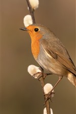Preview iPhone wallpaper Bird, sparrow, twigs