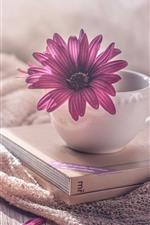 Cup, books, purple osteospermum flower