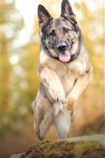 Preview iPhone wallpaper Dog jumping, hazy background