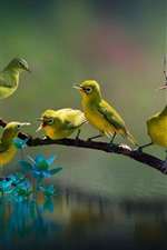 Fünf Vögel, Zweige, See