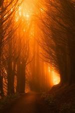 Forest, trees, path, sun rays, fog, morning