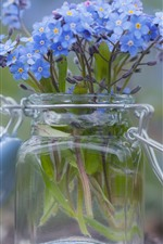 Forget-me-not flowers, little blue flowers, glass bottle
