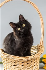 Furry black kitten, basket, sunflower
