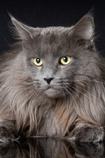 Preview iPhone wallpaper Furry gray cat, look, yellow eyes, black background