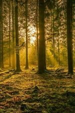 Germany, trees, sun rays, glare, nature