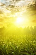미리보기 iPhone 배경 화면 잔디, 햇빛, 일출, 섬광, 아침