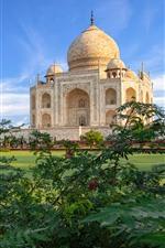 Índia, taj mahal, mesquita, arbustos