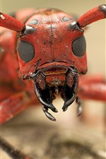 Preview iPhone wallpaper Insect macro photography, head, mouth, antennae