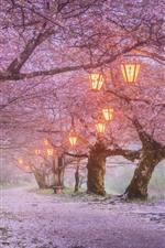Japan, sakura blossom, lanterns, spring