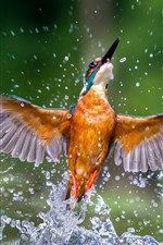 Preview iPhone wallpaper Kingfisher beautiful dance, wings, water splash, bird