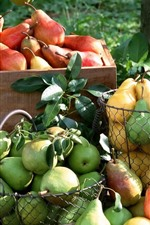Preview iPhone wallpaper Many pears, fruit, harvest