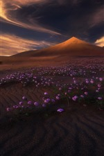Preview iPhone wallpaper Mountain, desert, purple flowers