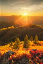 Preview iPhone wallpaper Mountains, trees, sun rays, glare, sunrise, nature landscape