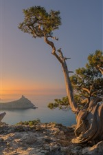 Russia, Crimea, sea, trees, coast, morning, fog, sun rays