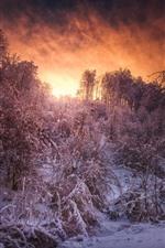 미리보기 iPhone 배경 화면 눈, 나무, 하늘, 구름, 일몰, 겨울