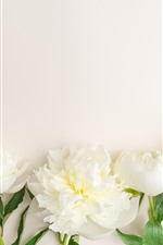 Preview iPhone wallpaper Some white peony flowers