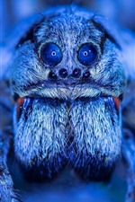 Preview iPhone wallpaper Spider macro photography, eyes, blue style