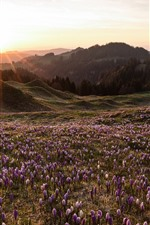 Preview iPhone wallpaper Spring, crocus blossom, mountains, sun rays, morning
