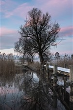 Tree, bridge, reeds, river, nature landscape