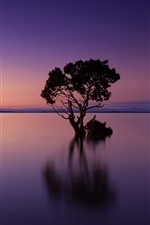 Tree, lake, sunset, dusk