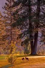 Trees, deers, sun rays, morning