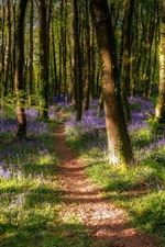 Preview iPhone wallpaper Trees, forest, purple wildflowers, spring