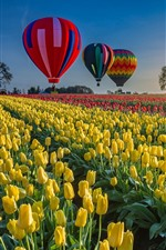 Preview iPhone wallpaper Tulips field, hot air balloon