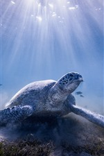 Preview iPhone wallpaper Turtle, underwater, sun rays