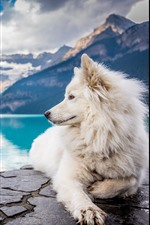 Preview iPhone wallpaper White dog look back, lake, mountains