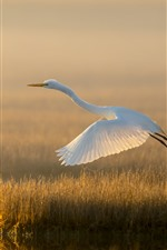 Preview iPhone wallpaper White egret, flight, grass