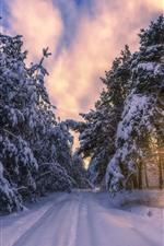 Winter, morning, snow, trees, sun rays, path