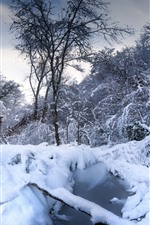 Preview iPhone wallpaper Winter, snow, trees, puddle