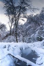 Inverno, neve, árvores, poça