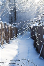 Winter, snow, twigs, path, fence
