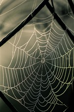 Preview iPhone wallpaper Wire fence, spider web
